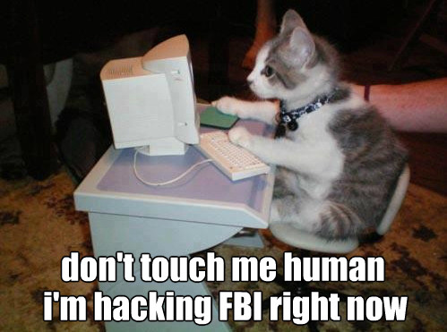 hacker-kitty-is-you-know-e